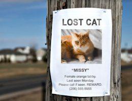 گربه گمشده و 8 راه پیدا شدن آن