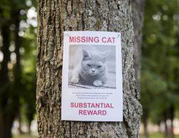 متن اگهی گم شدن سگ