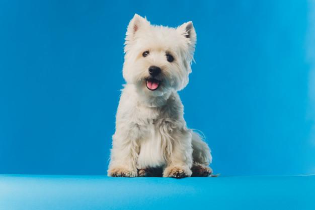 کاهش و درمان ریزش موی سگ