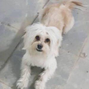 سگ گمشده تهران