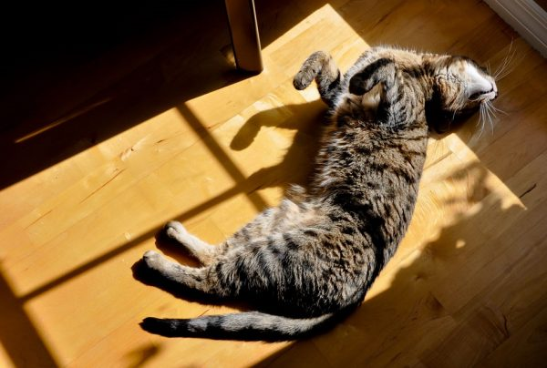 آفتاب سوختگی در حیوانات و گربه