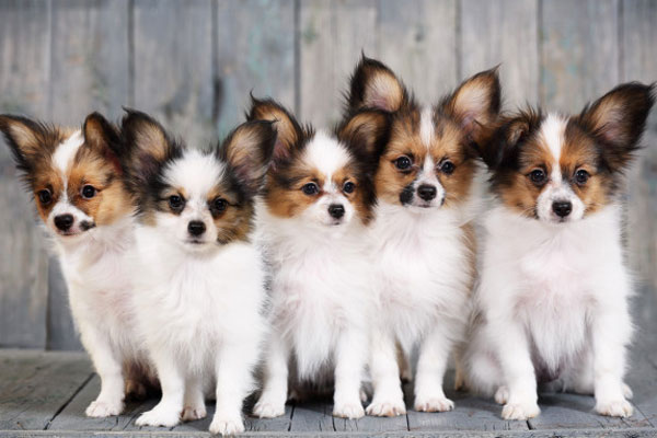 کاهش اضطراب جدایی سگ