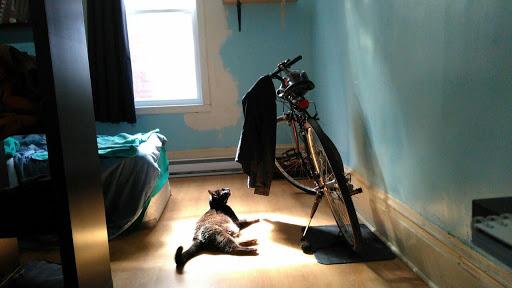 آفتاب سوختگی گربه