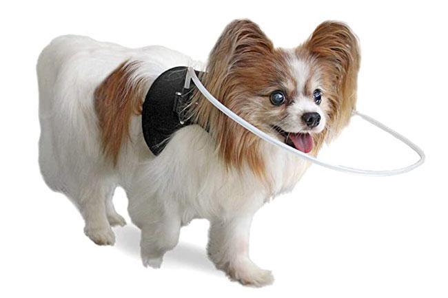 سگ نابینا