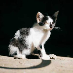 گربه گمشده