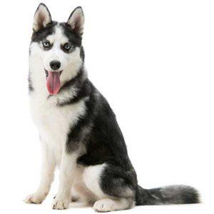 واگذاری رایگان سگ غیر آپارتمانی
