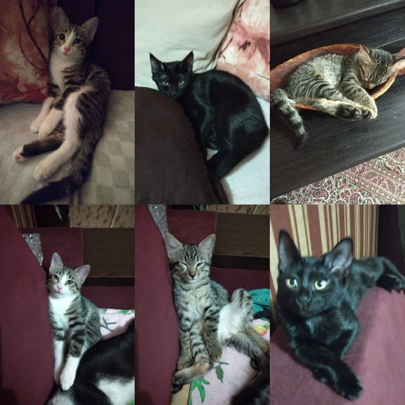 واگذاری 5 عدد گربه خونگی 3ماهه